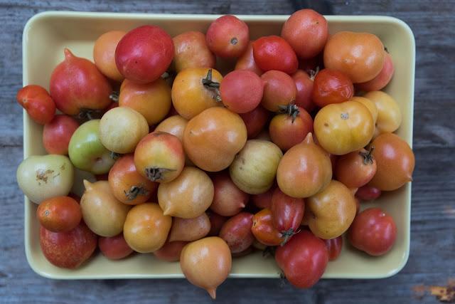 lagrade tomater december