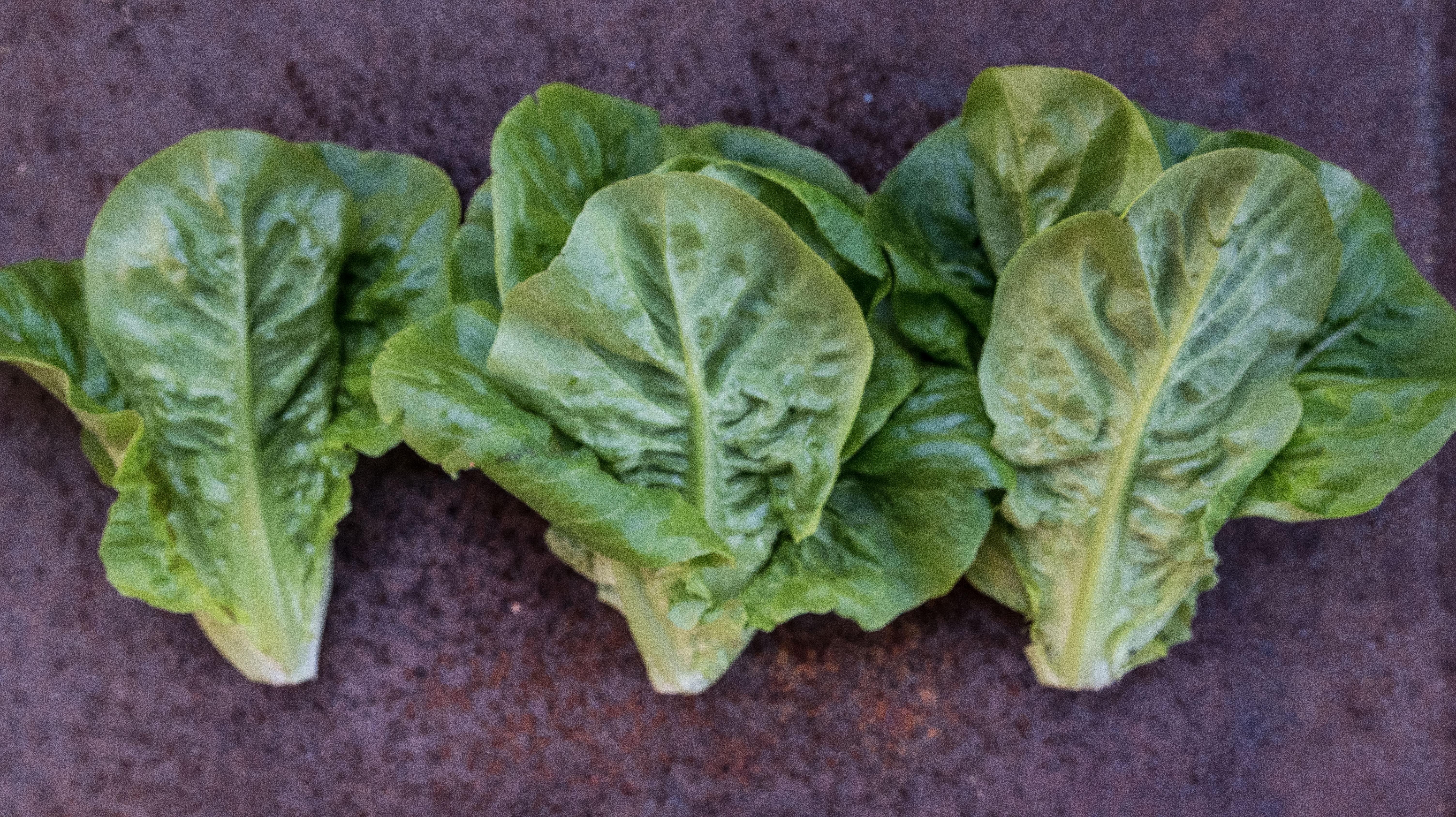 Little Gem årets godaste sallat