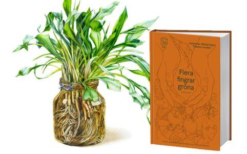 Flera fingrar gröna bok och ramslök