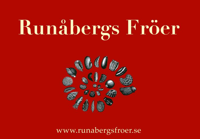 Denna bild har ett alt-attribut som är tomt. Dess filnamn är Runabergs-700x489.jpg