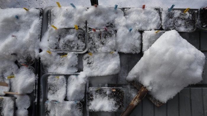 Vintersådd av grönsaker
