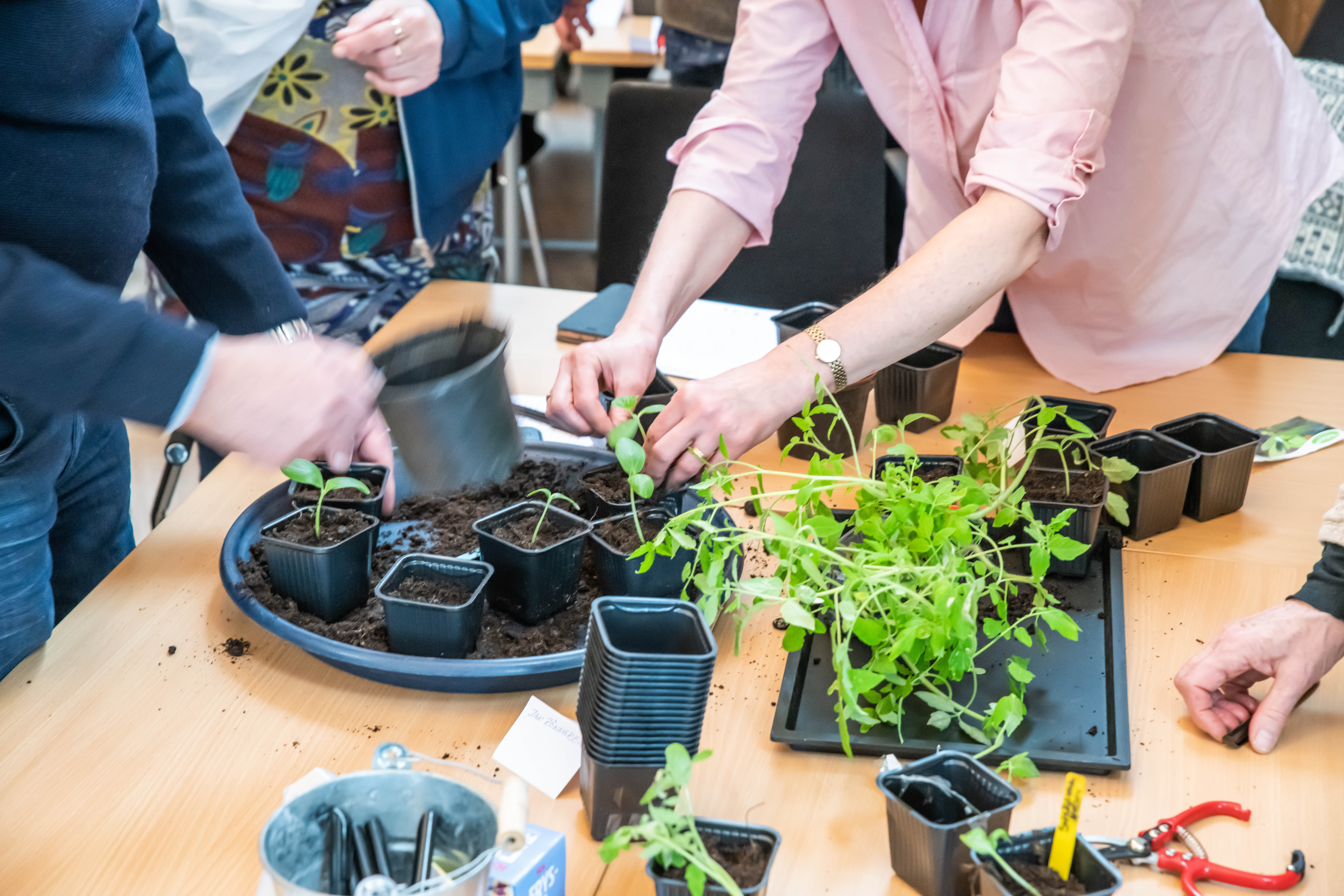 Omplantering på Farbror Gröns odlingskurs