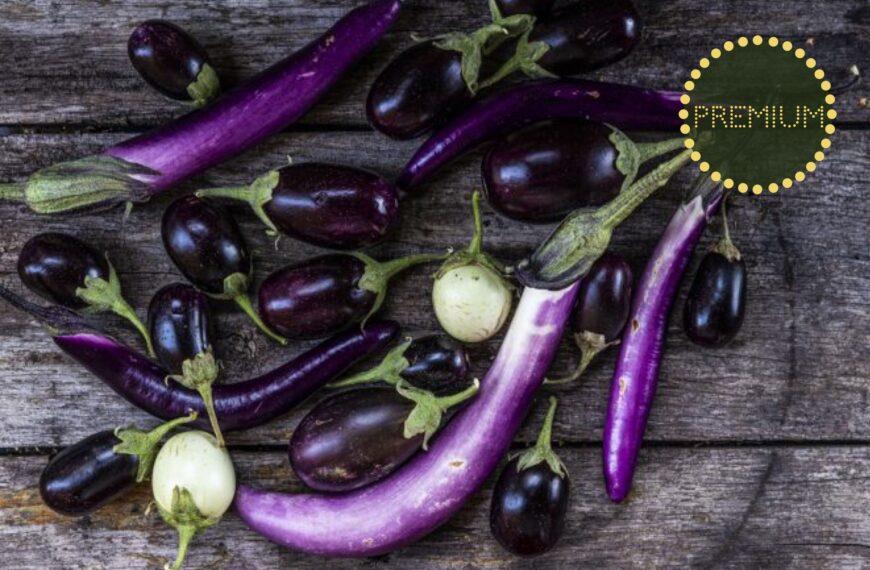 Odla aubergine – från sådd till skörd