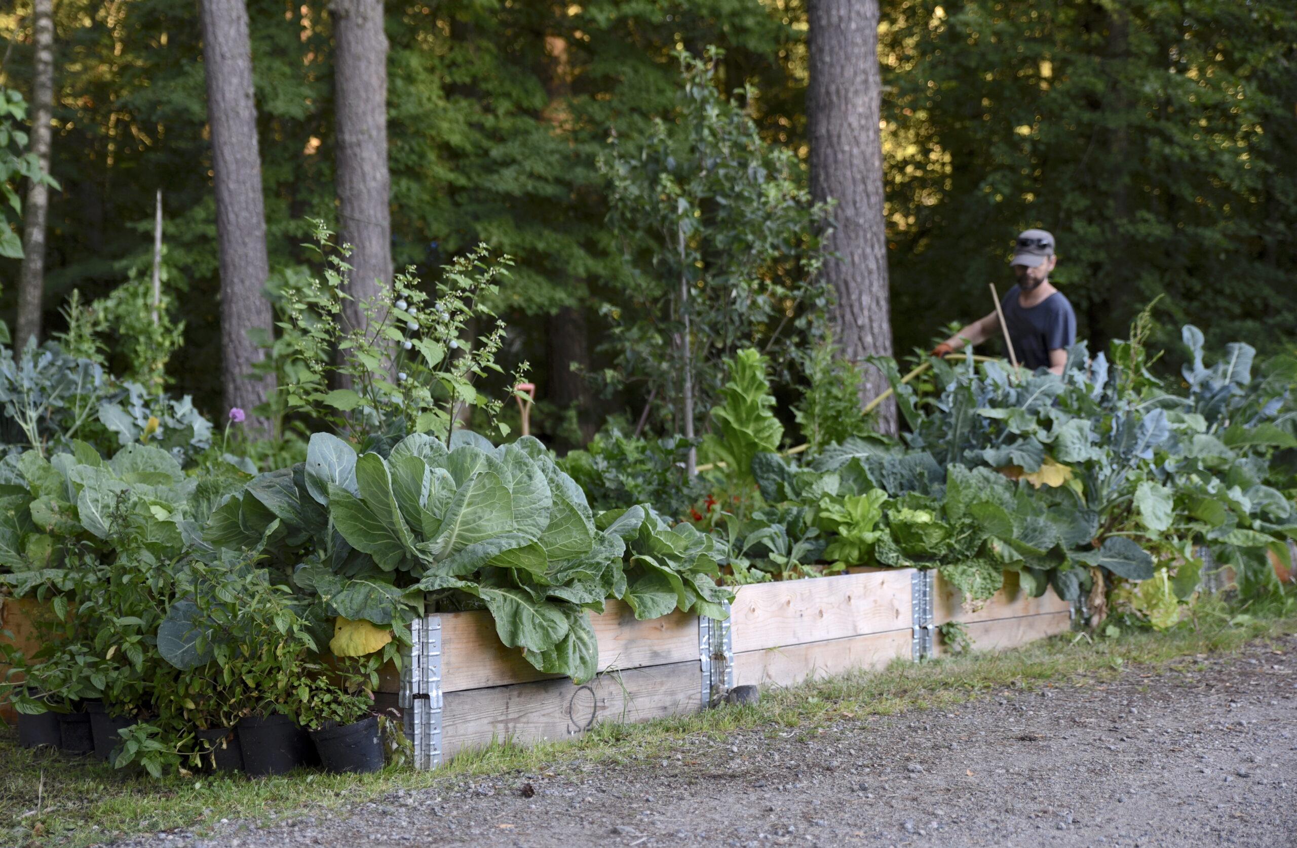 Skuggig trädgård med pallkrageodling