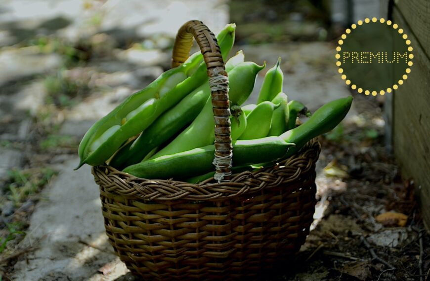 Odla bondbönor – från sådd till skörd